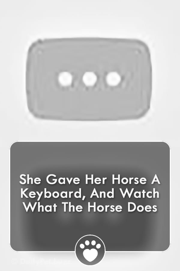 She Gave Her Horse A Keyboard, And Watch What The Horse Does