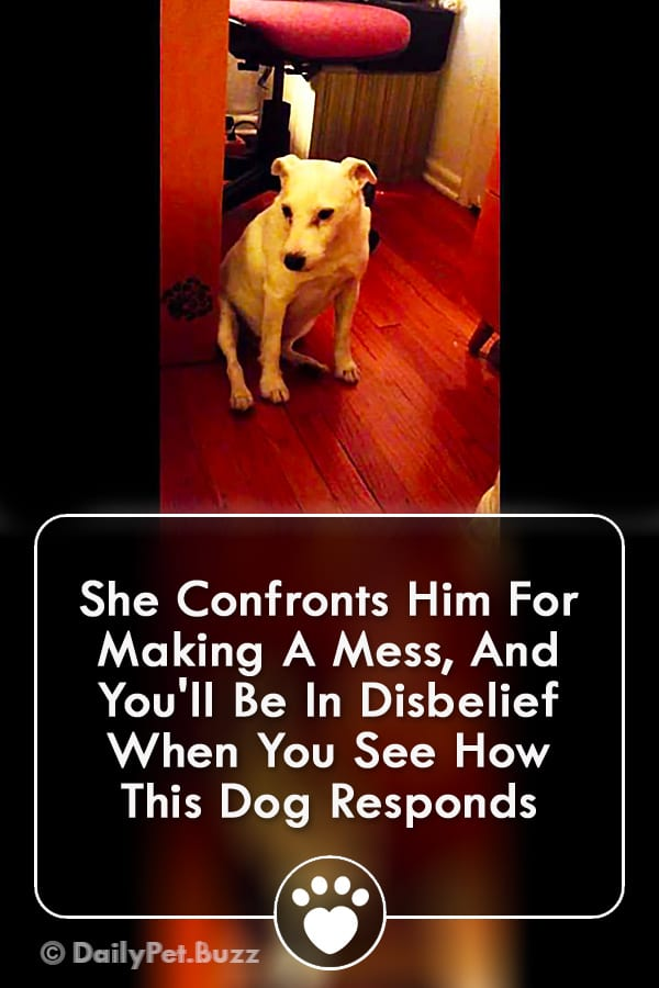 She Confronts Him For Making A Mess, And You\'ll Be In Disbelief When You See How This Dog Responds