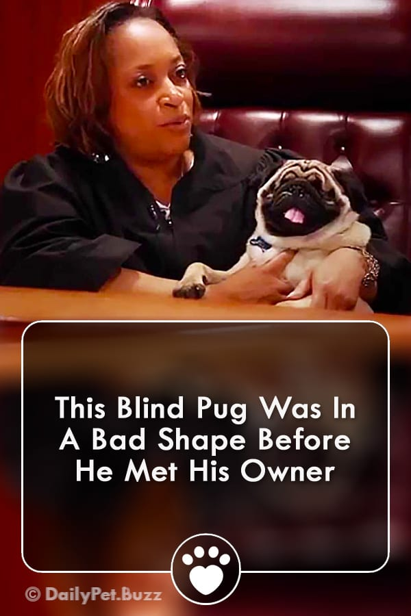 This Blind Pug Was In A Bad Shape Before He Met His Owner