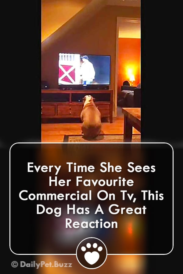 Every Time She Sees Her Favourite Commercial On Tv, This Dog Has A Great Reaction