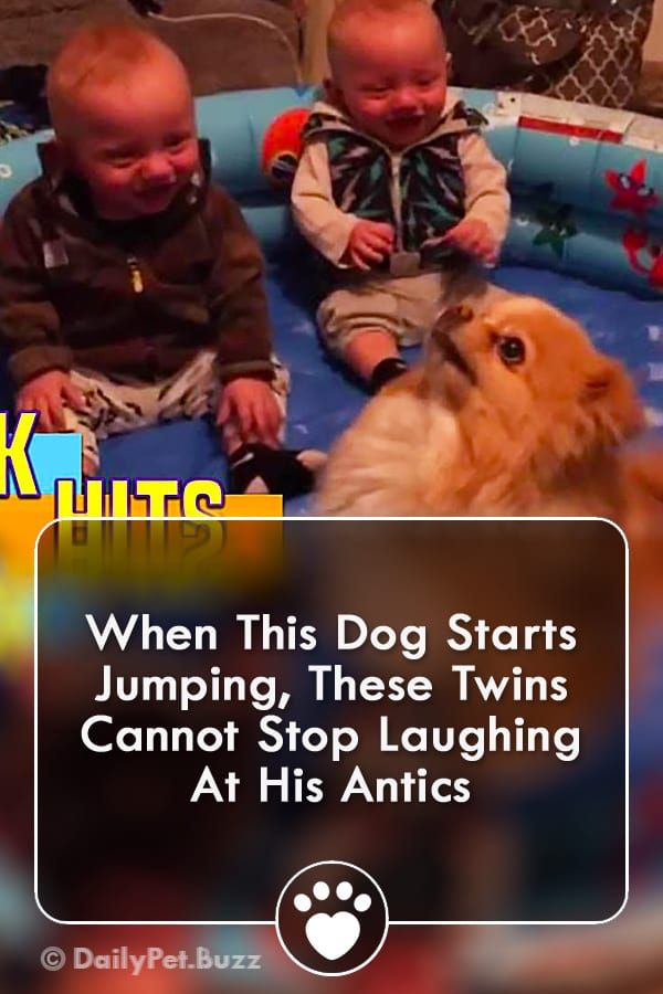 When This Dog Starts Jumping, These Twins Cannot Stop Laughing At His Antics