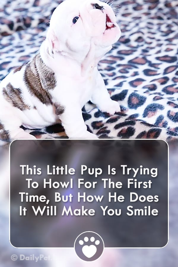 This Little Pup Is Trying To Howl For The First Time, But How He Does It Will Make You Smile