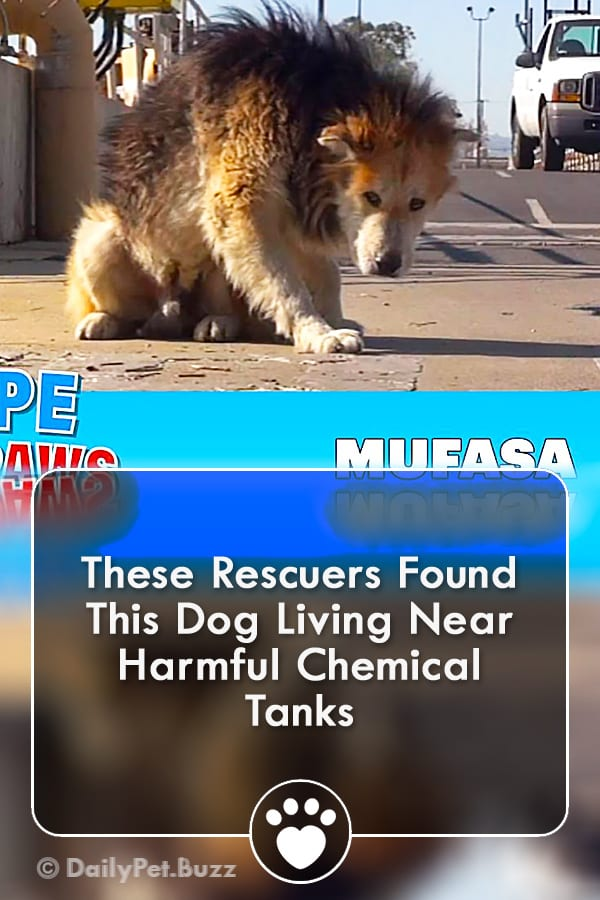 These Rescuers Found This Dog Living Near Harmful Chemical Tanks