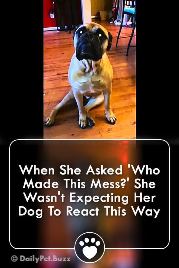 When She Asked \'Who Made This Mess?\' She Wasn\'t Expecting Her Dog To React This Way