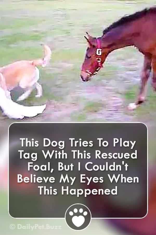 This Dog Tries To Play Tag With This Rescued Foal, But I Couldn\'t Believe My Eyes When This Happened