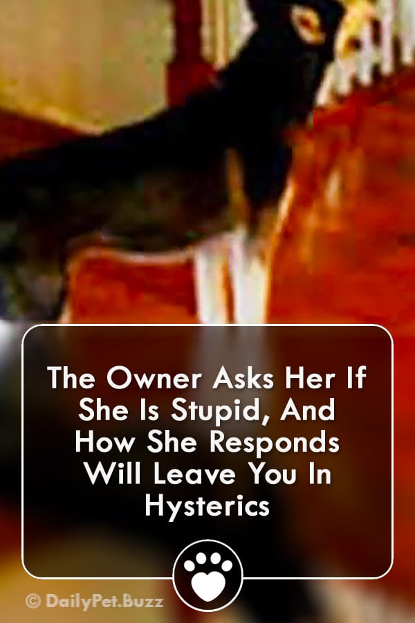 The Owner Asks Her If She Is Stupid, And How She Responds Will Leave You In Hysterics