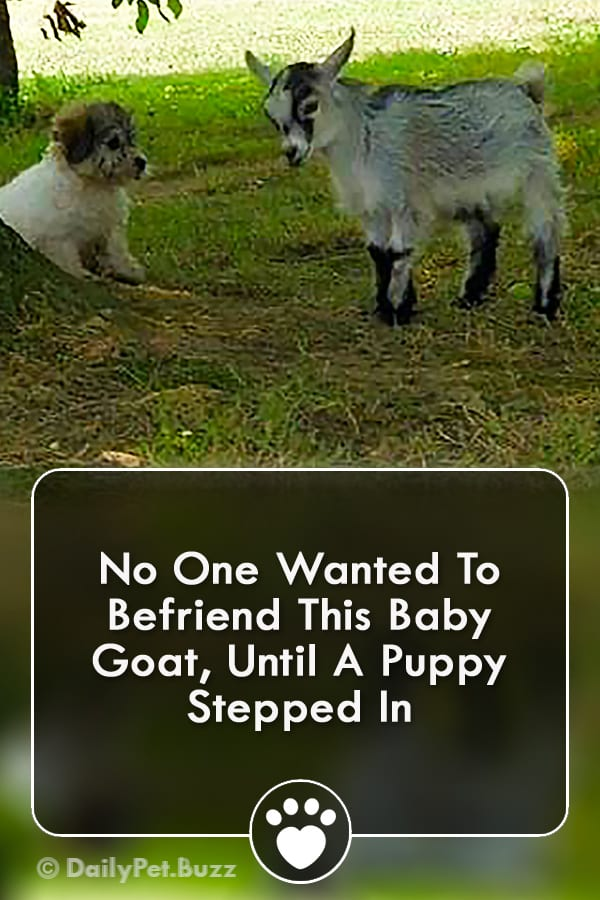 No One Wanted To Befriend This Baby Goat, Until A Puppy Stepped In