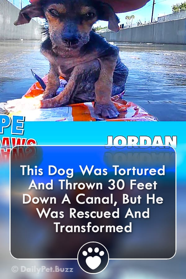 This Dog Was Tortured And Thrown 30 Feet Down A Canal, But He Was Rescued And Transformed