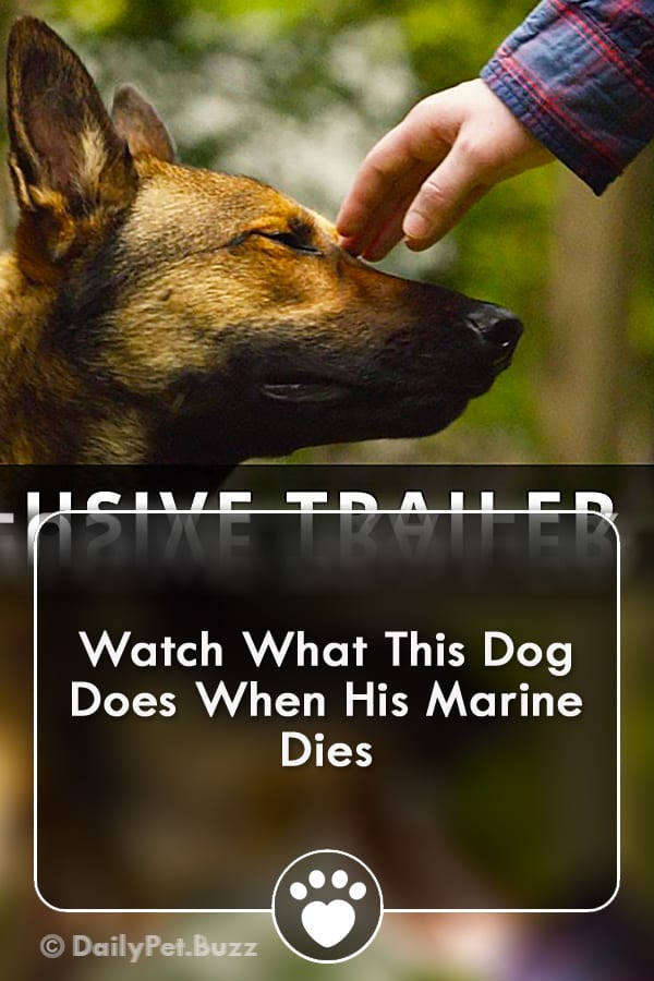 Watch What This Dog Does When His Marine Dies