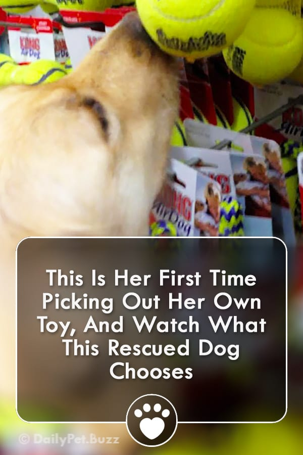 This Is Her First Time Picking Out Her Own Toy, And Watch What This Rescued Dog Chooses