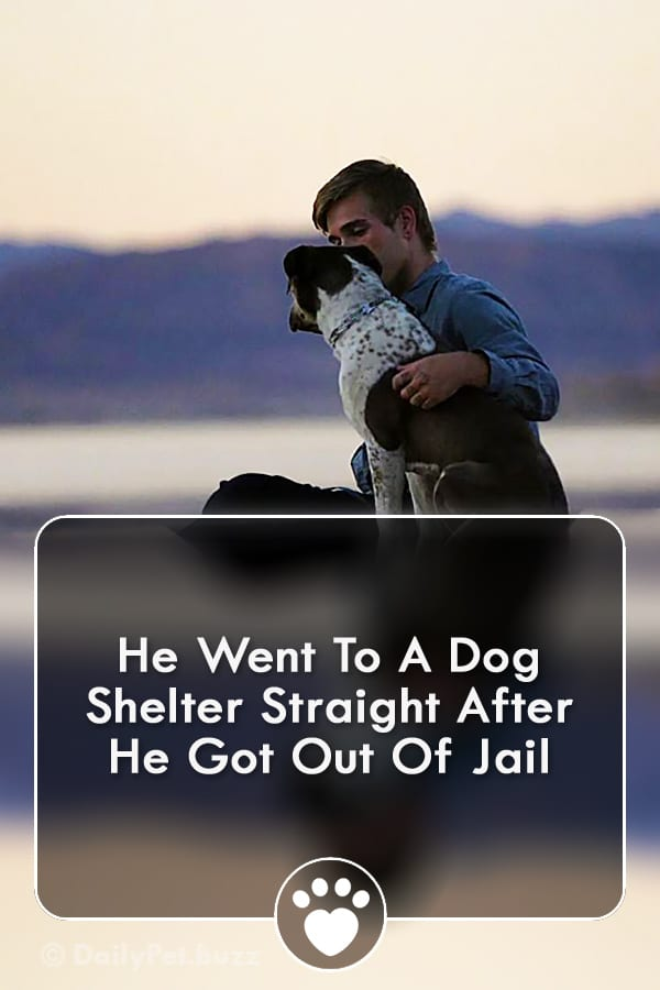 He Went To A Dog Shelter Straight After He Got Out Of Jail