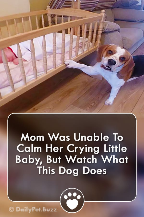 Mom Was Unable To Calm Her Crying Little Baby, But Watch What This Dog Does