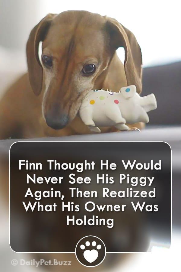 Finn Thought He Would Never See His Piggy Again, Then Realized What His Owner Was Holding