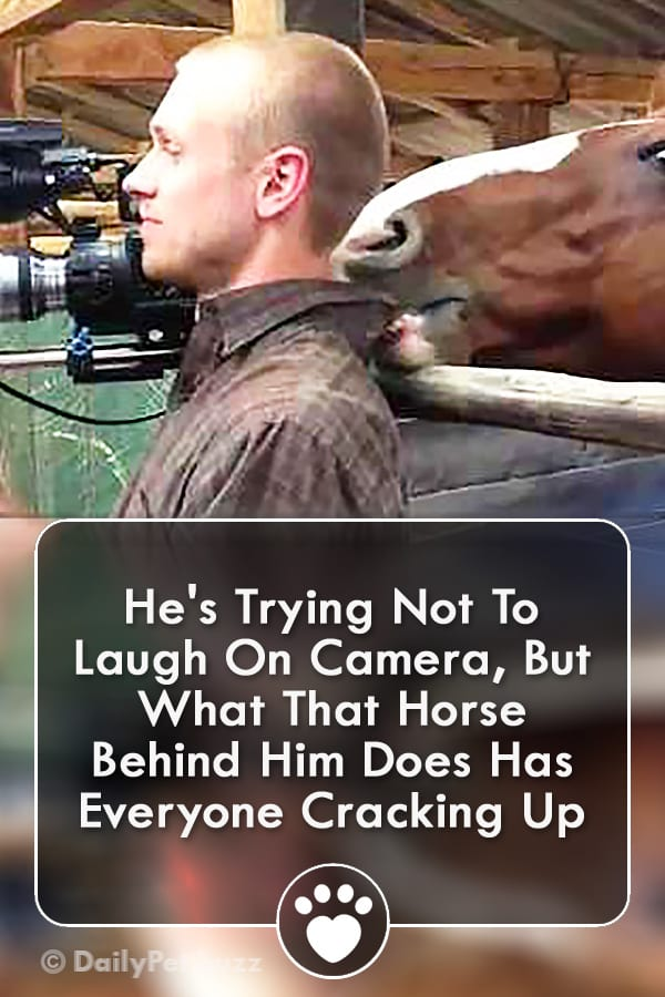 He\'s Trying Not To Laugh On Camera, But What That Horse Behind Him Does Has Everyone Cracking Up