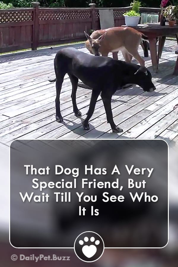 That Dog Has A Very Special Friend, But Wait Till You See Who It Is