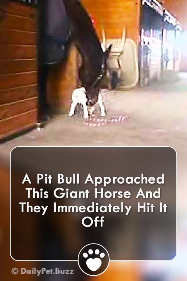 A Pit Bull Approached This Giant Horse And They Immediately Hit It Off