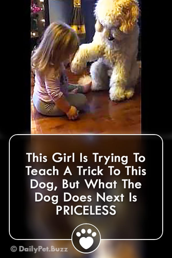 This Girl Is Trying To Teach A Trick To This Dog, But What The Dog Does Next Is PRICELESS