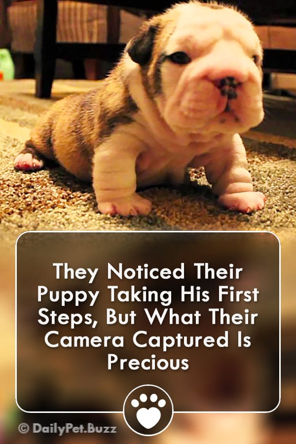 They Noticed Their Puppy Taking His First Steps, But What Their Camera Captured Is Precious