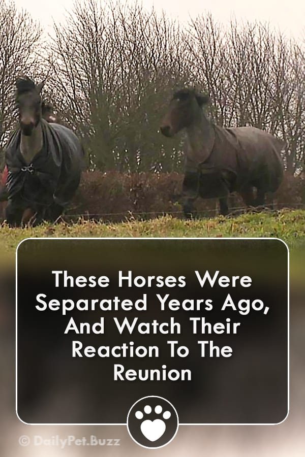 These Horses Were Separated Years Ago, And Watch Their Reaction To The Reunion