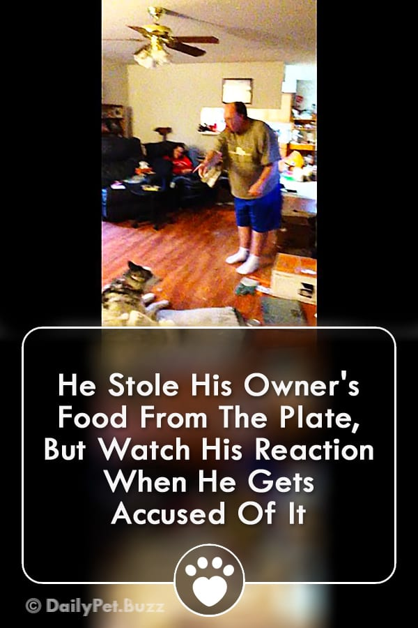 He Stole His Owner\'s Food From The Plate, But Watch His Reaction When He Gets Accused Of It