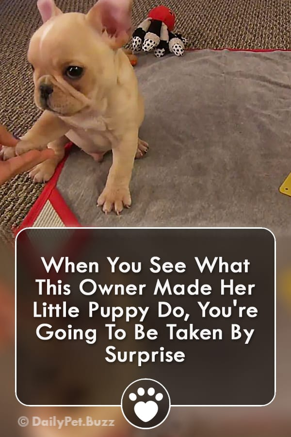 When You See What This Owner Made Her Little Puppy Do, You\'re Going To Be Taken By Surprise