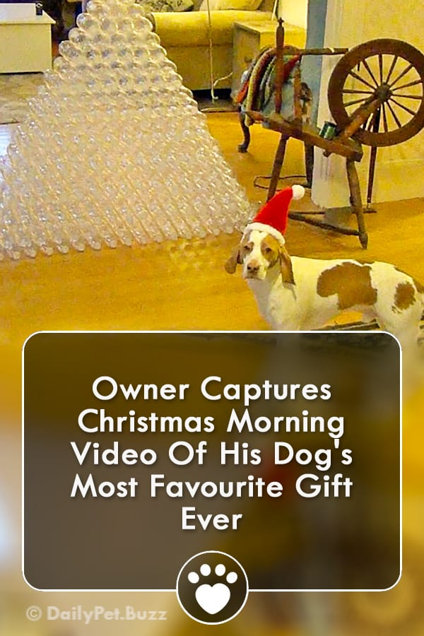 Owner Captures Christmas Morning Video Of His Dog\'s Most Favourite Gift Ever