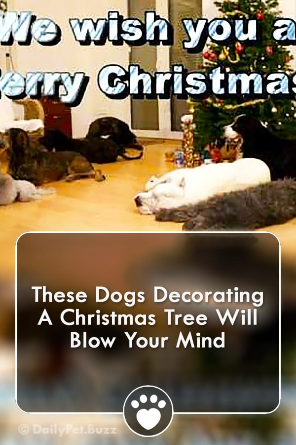 These Dogs Decorating A Christmas Tree Will Blow Your Mind