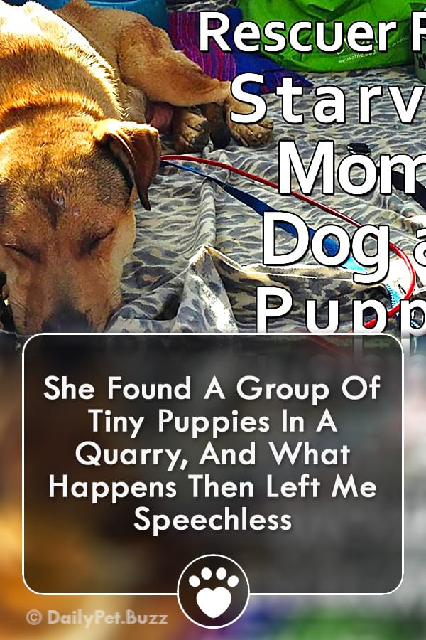 She Found A Group Of Tiny Puppies In A Quarry, And What Happens Then Left Me Speechless