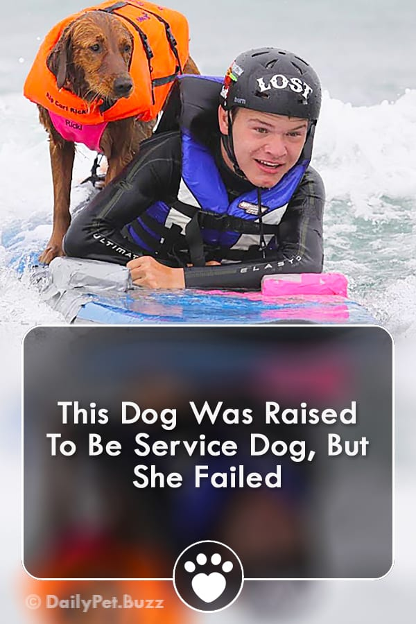 This Dog Was Raised To Be Service Dog, But She Failed