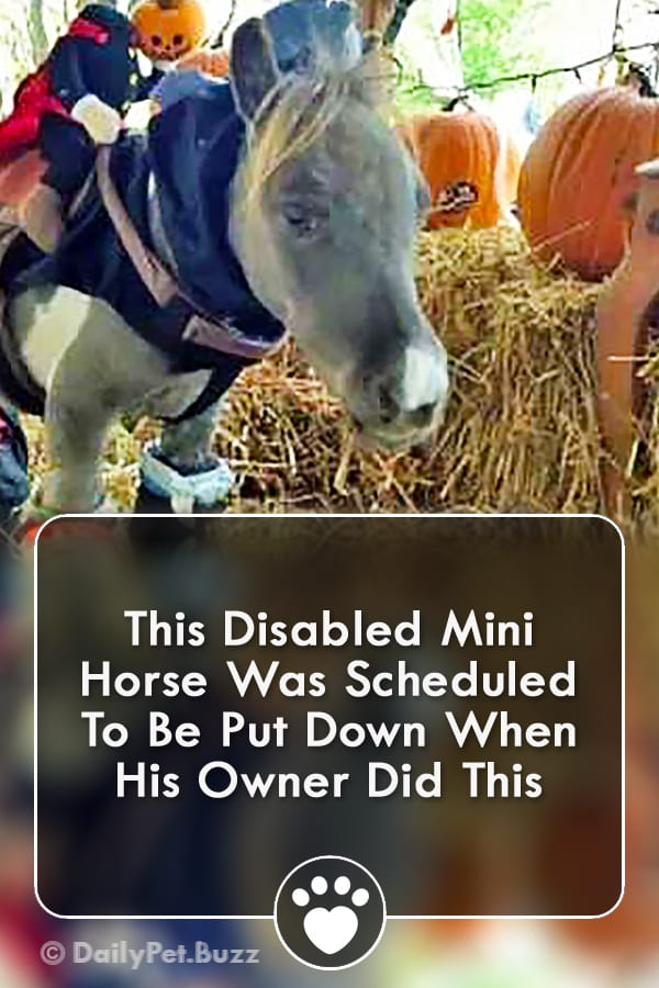 This Disabled Mini Horse Was Scheduled To Be Put Down When His Owner Did This