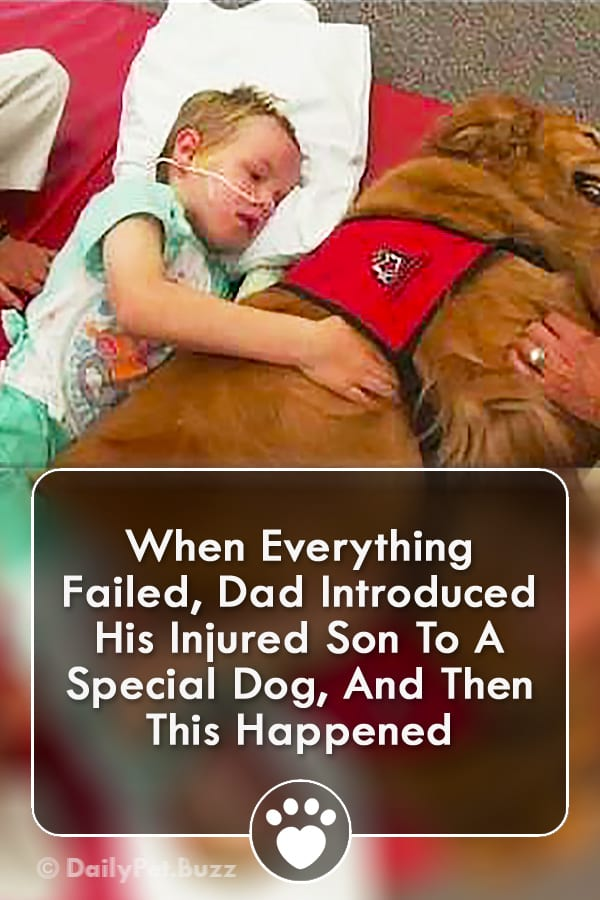 When Everything Failed, Dad Introduced His Injured Son To A Special Dog, And Then This Happened