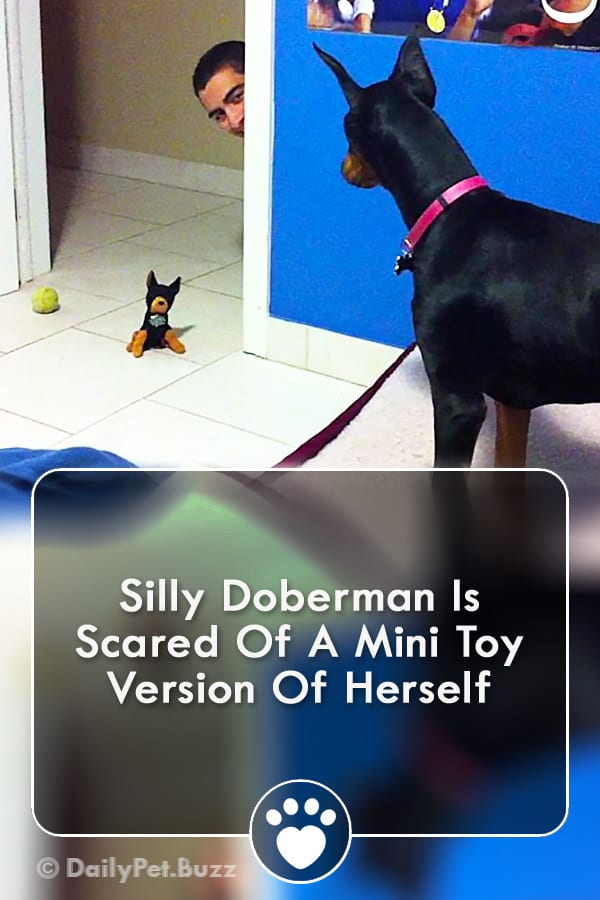 Silly Doberman Is Scared Of A Mini Toy Version Of Herself