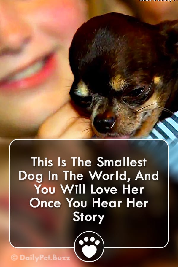 This Is The Smallest Dog In The World, And You Will Love Her Once You Hear Her Story