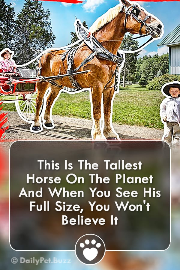 This Is The Tallest Horse On The Planet And When You See His Full Size, You Won\'t Believe It