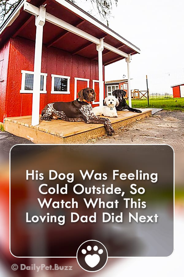 His Dog Was Feeling Cold Outside, So Watch What This Loving Dad Did Next