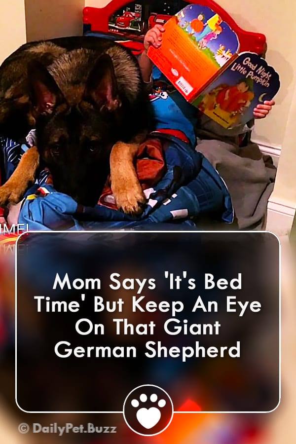 Mom Says \'It\'s Bed Time\' But Keep An Eye On That Giant German Shepherd