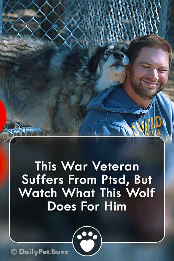 This War Veteran Suffers From Ptsd, But Watch What This Wolf Does For Him