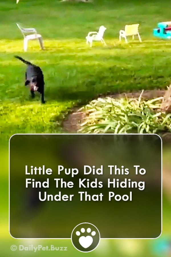 Little Pup Did This To Find The Kids Hiding Under That Pool