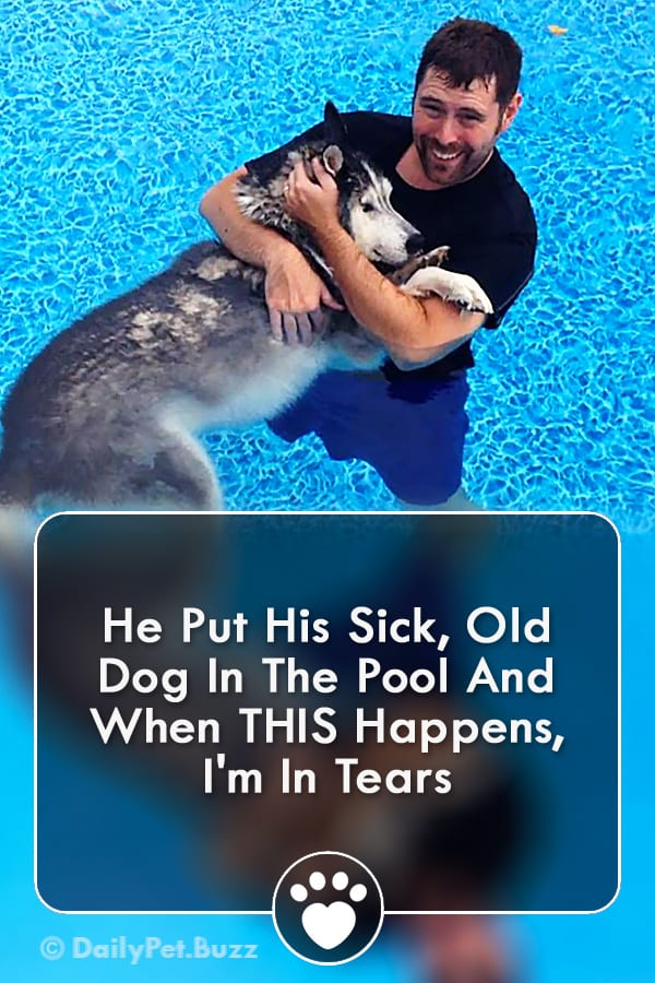 He Put His Sick, Old Dog In The Pool And When THIS Happens, I\'m In Tears