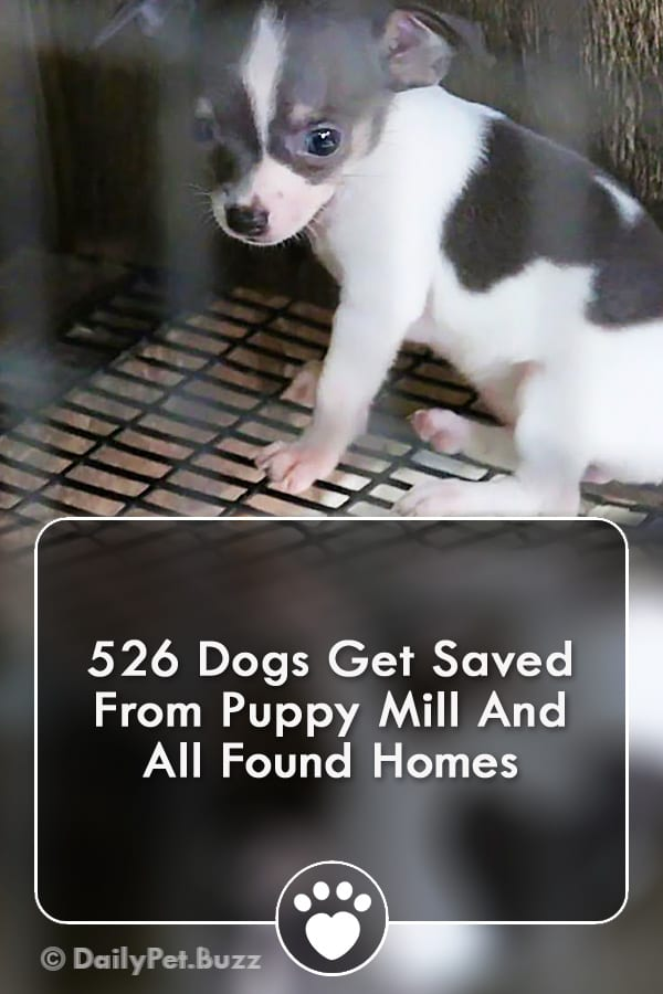 526 Dogs Get Saved From Puppy Mill And All Found Homes