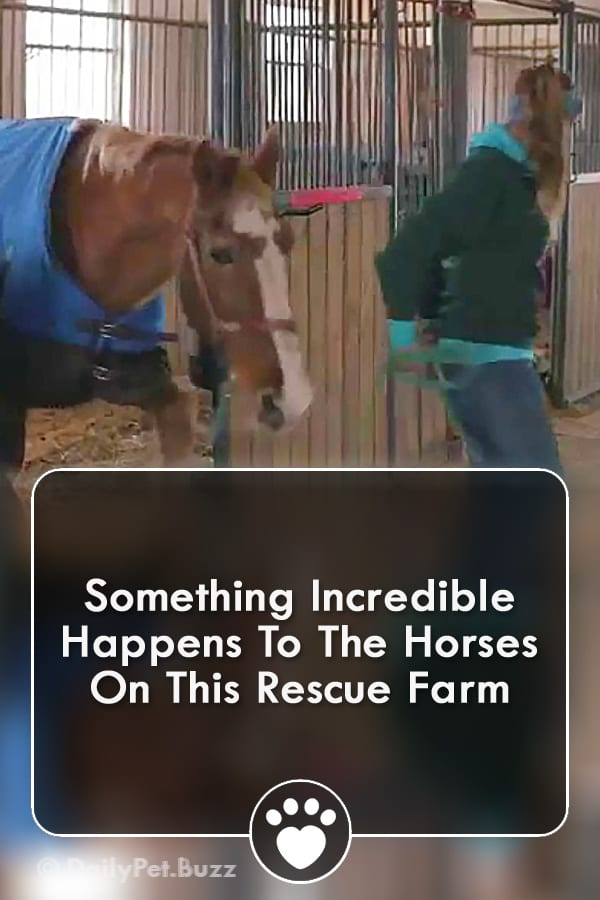 Something Incredible Happens To The Horses On This Rescue Farm