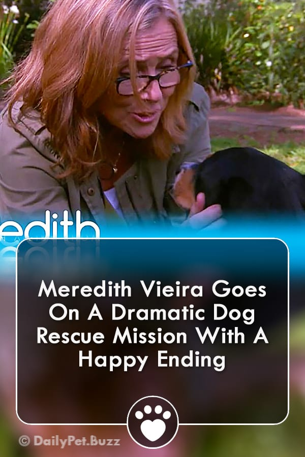 Meredith Vieira Goes On A Dramatic Dog Rescue Mission With A Happy Ending