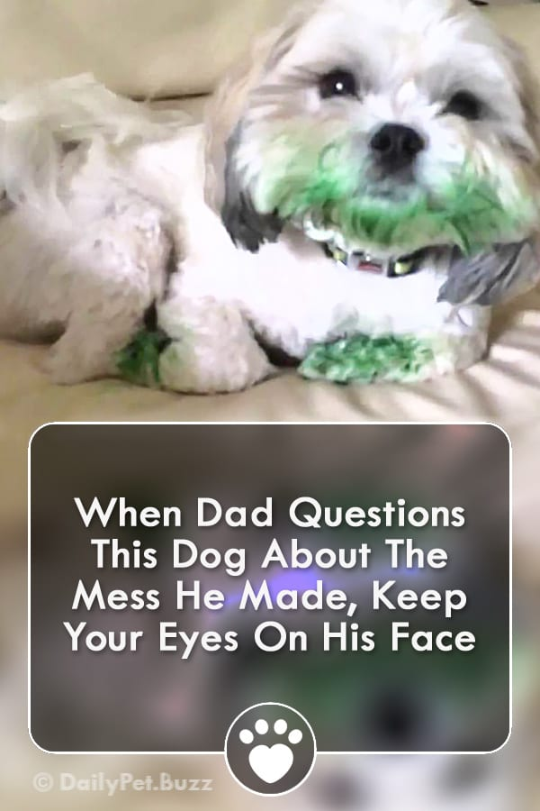 When Dad Questions This Dog About The Mess He Made, Keep Your Eyes On His Face