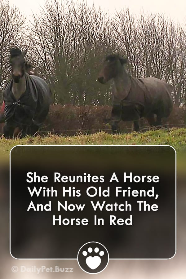 She Reunites A Horse With His Old Friend, And Now Watch The Horse In Red
