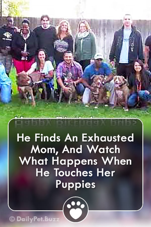 He Finds An Exhausted Mom, And Watch What Happens When He Touches Her Puppies