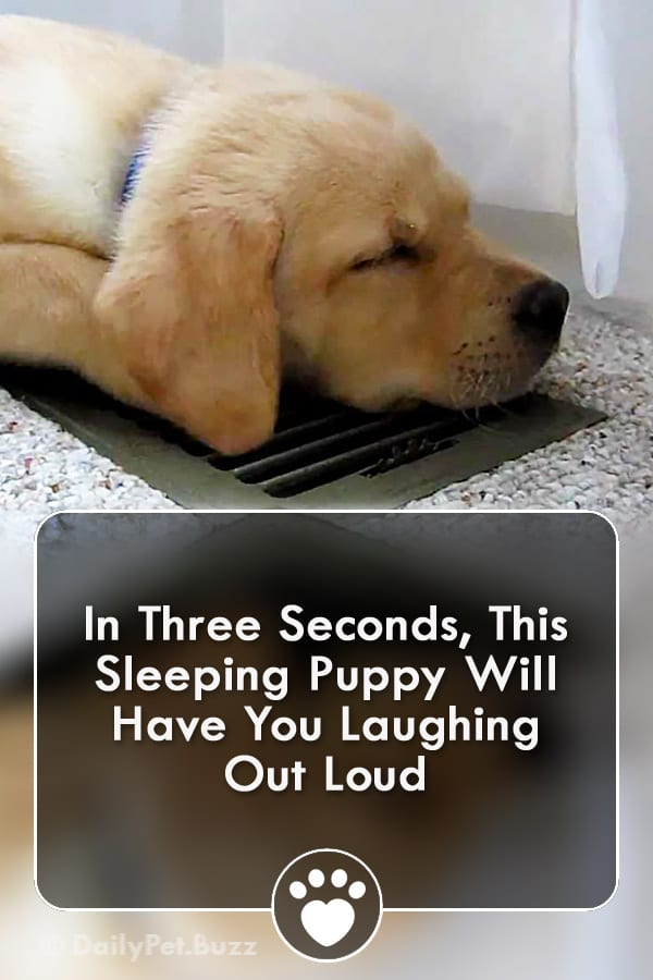 In Three Seconds, This Sleeping Puppy Will Have You Laughing Out Loud