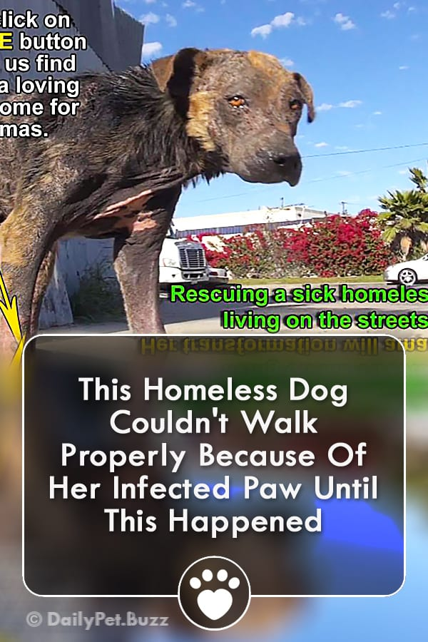 This Homeless Dog Couldn\'t Walk Properly Because Of Her Infected Paw Until This Happened
