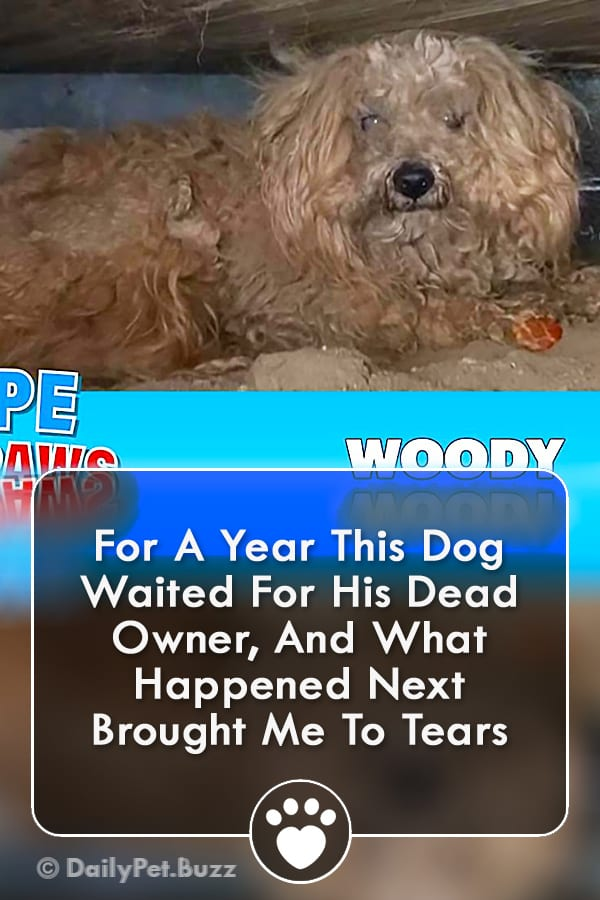 For A Year This Dog Waited For His Dead Owner, And What Happened Next Brought Me To Tears
