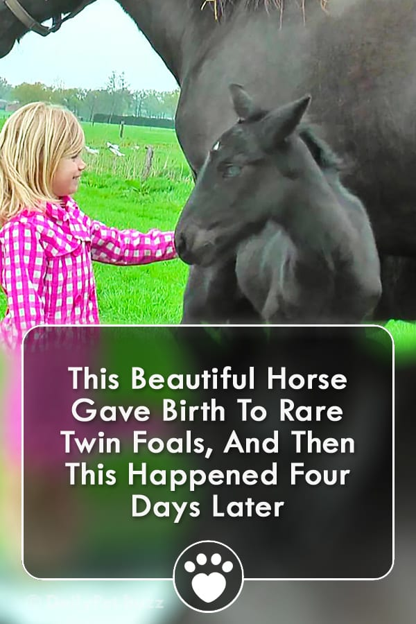 This Beautiful Horse Gave Birth To Rare Twin Foals, And Then This Happened Four Days Later