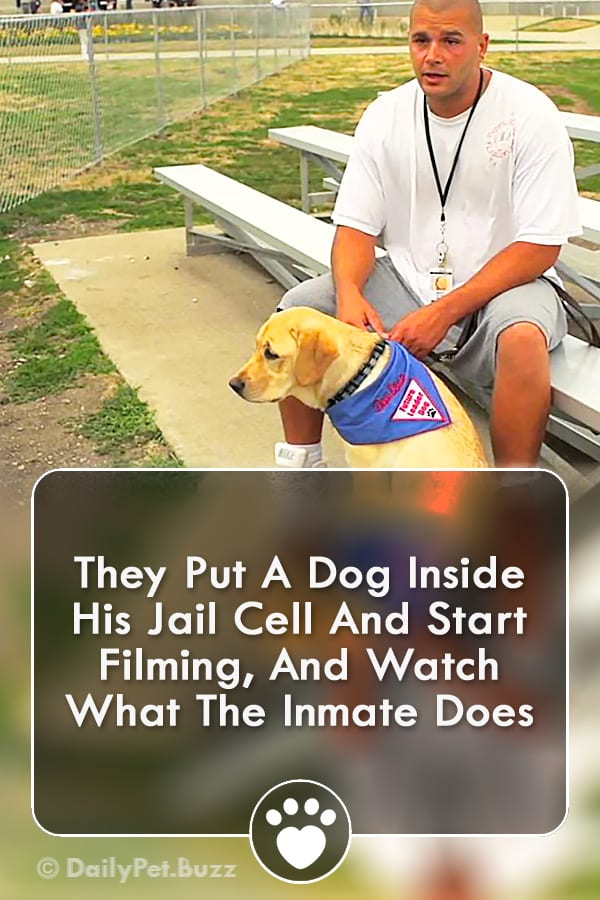 They Put A Dog Inside His Jail Cell And Start Filming, And Watch What The Inmate Does